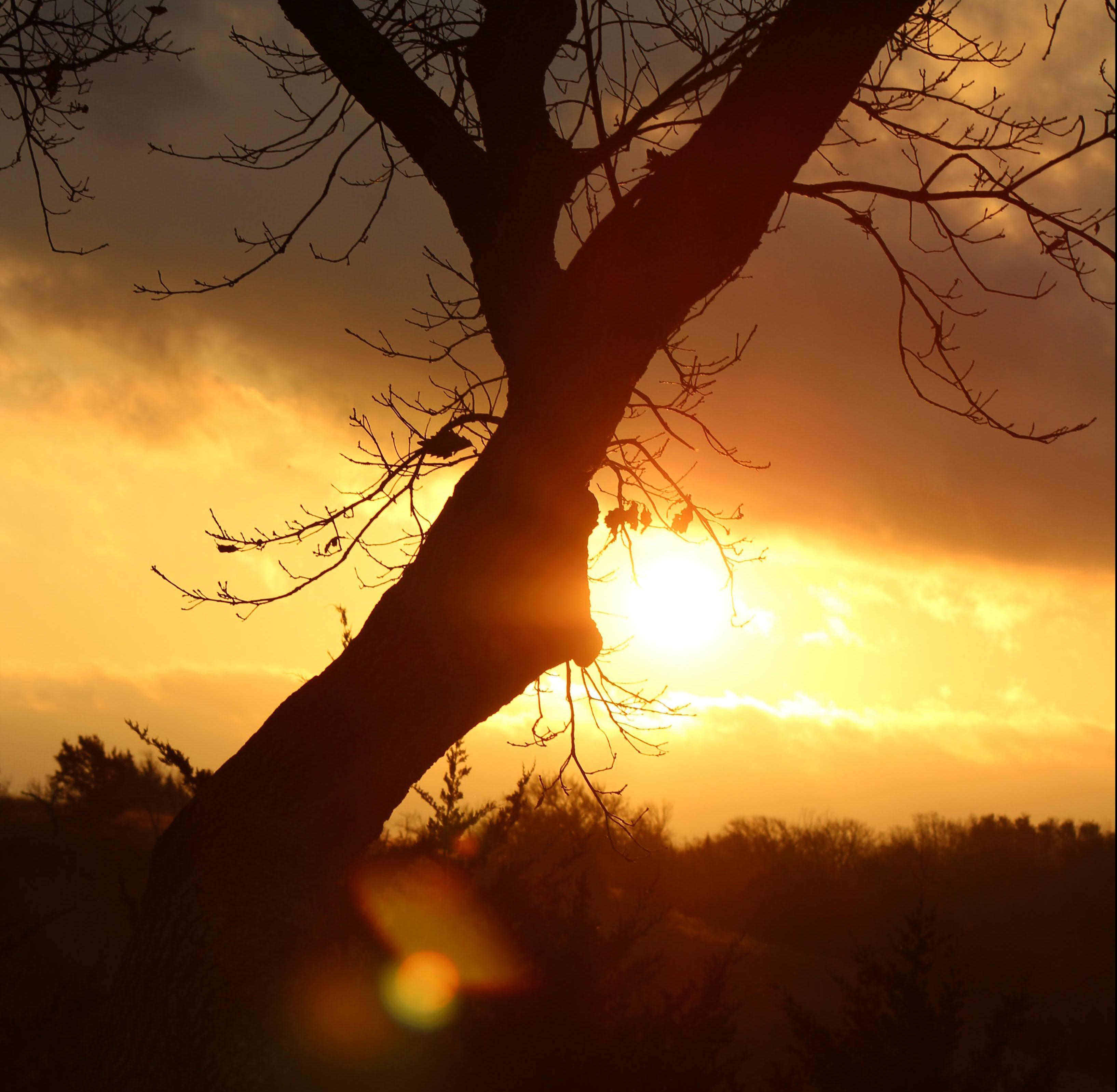 Tree Sunrise + Sun Glare